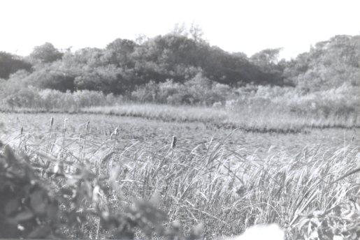 montaukfield_1990